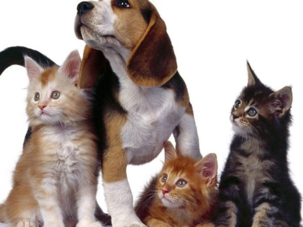 pet-shop-e1549834282711